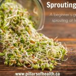 Sprouting 101